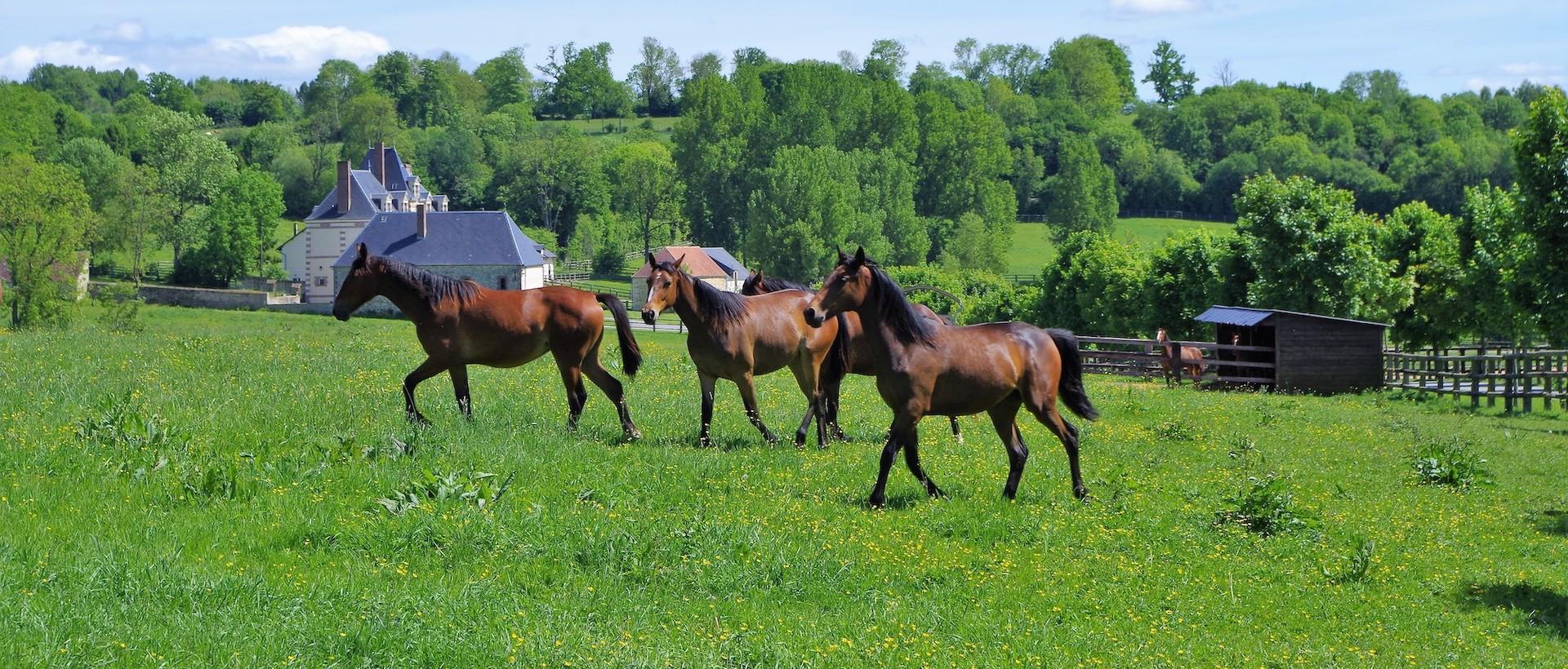 Le pays du Merlerault : Terre du cheval